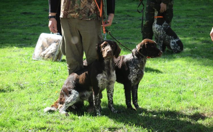 Test hodowlany dla wyżłów i psów myśliwskich małych ras 04.09.2021
